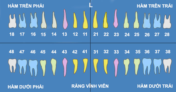 so-do-rang-vinh-vien.jpg